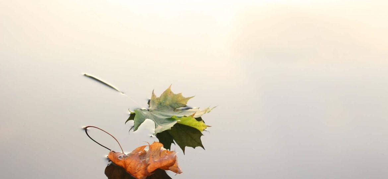 poemas de outono